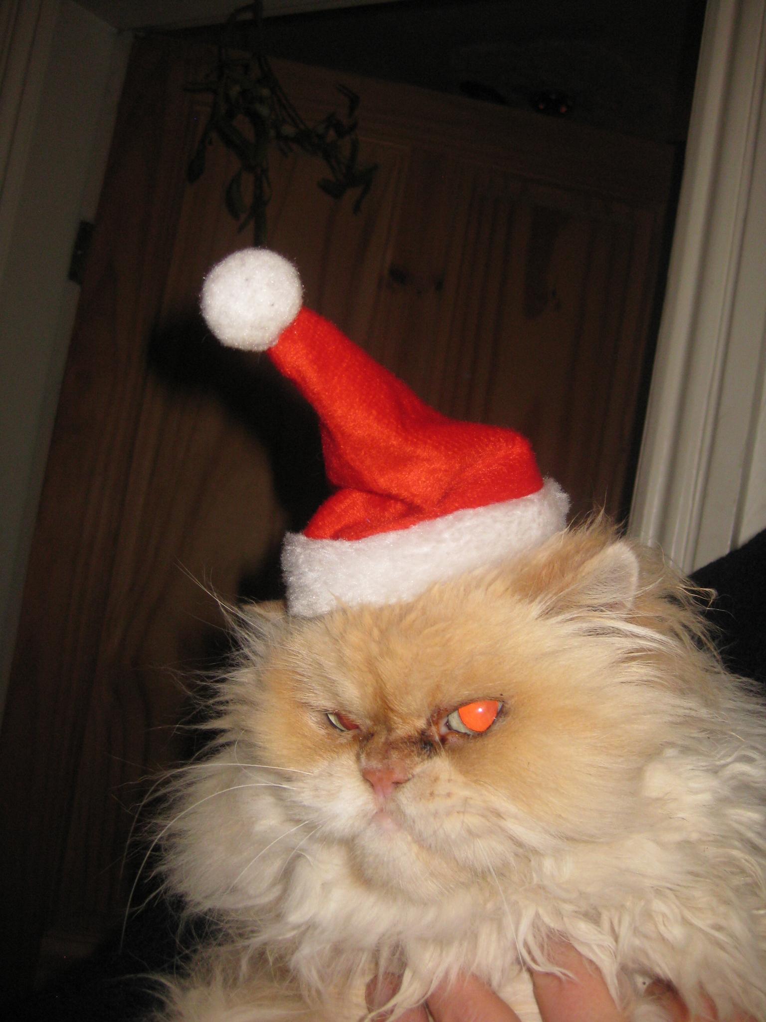 Binky in santa hat