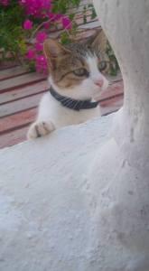 Friendly little fella in Perissa, Santorini, 2015.