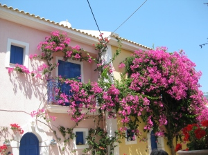 Beautiful Bougainvillea - Kefalonia, 2010.